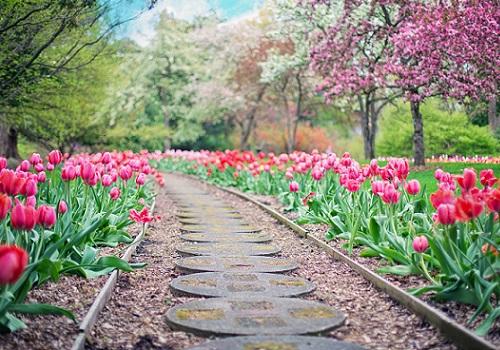 tulipani ok